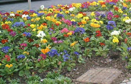 flores encardiff